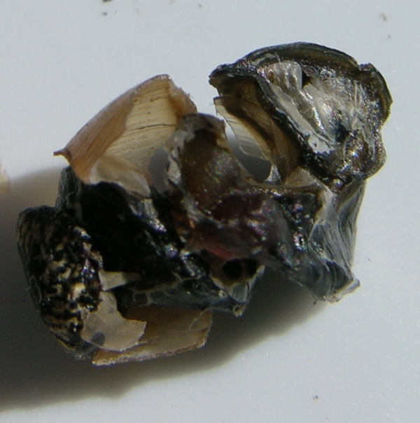 Snail Body